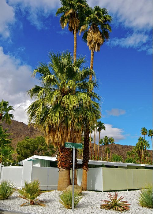 Fan Palm Tree Greeting Card featuring the photograph Mountains, Plants & Mid-century Home In by Jaylazarin