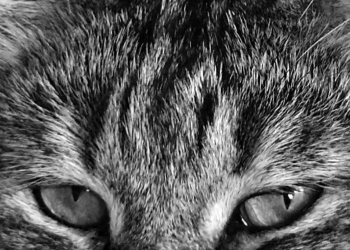 Black And White Greeting Card featuring the photograph Mr. Blue Eyes by Rhonda McDougall