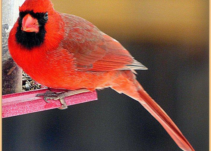Bird Greeting Card featuring the photograph Mr. Cardinal by Rennae Christman