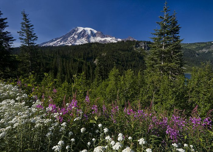 3scape Photos Greeting Card featuring the photograph Mt. Rainier by Adam Romanowicz