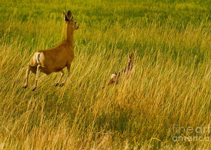 Deer Greeting Card featuring the photograph Mule Deer Doe And Fawn-signed-#0365 by J L Woody Wooden