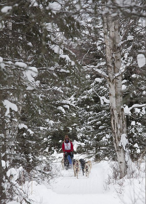 Adult Greeting Card featuring the photograph Musher In The Forest by Tim Grams