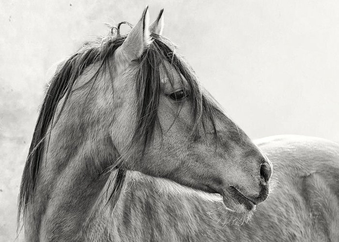 Equine Greeting Card featuring the photograph Mustang by Ron McGinnis