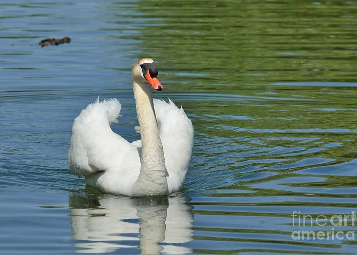 Mute Swan Greeting Card featuring the photograph Mute Swan by Nedra Bell