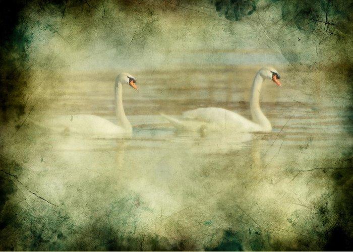 Birds Greeting Card featuring the digital art Mute Swan Pair by Daniel Lee Brown