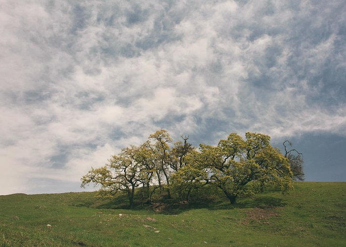 Sunol Regional Wilderness Greeting Card featuring the photograph My Dreams Of Us by Laurie Search