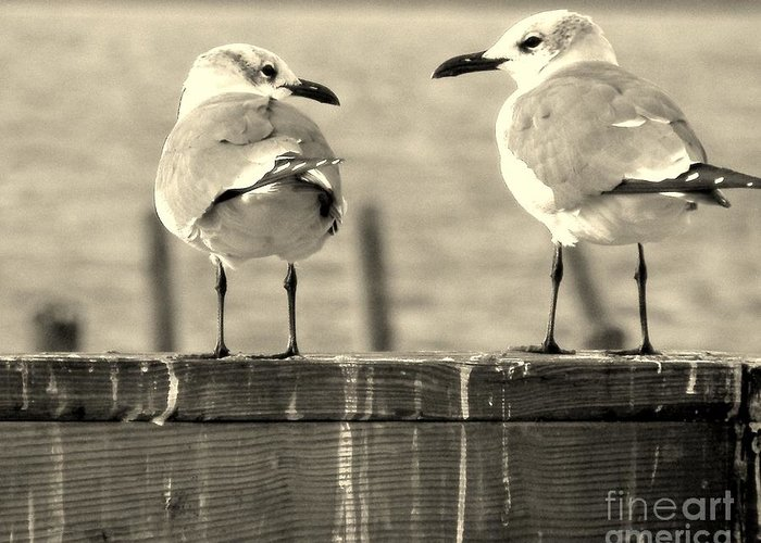 Sea Gulls Greeting Card featuring the photograph My Opinion Exactly by Joe Jake Pratt
