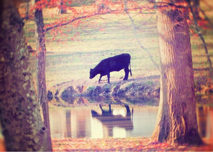 Black Cow Greeting Card featuring the photograph My Own Paradise by Amy Tyler