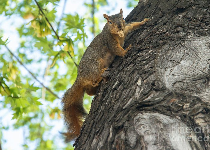 Squirrel Greeting Card featuring the photograph My Peanut by Robert Bales