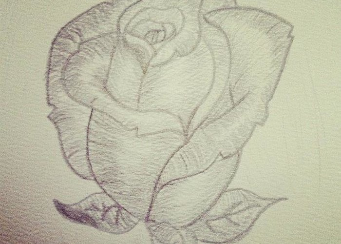Pencil greeting card featuring the photograph my rose rose flower pencil drawing