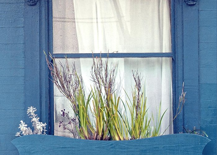 San Francisco Greeting Card featuring the photograph My San Francisco Window Garden by Artist and Photographer Laura Wrede