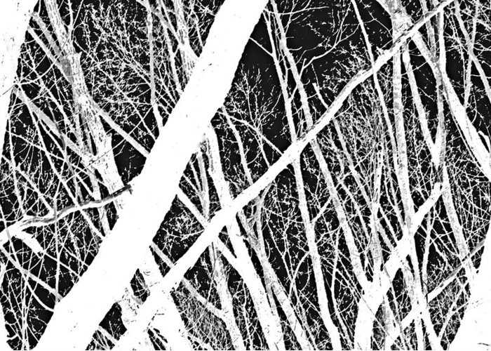 Abstracts Greeting Card featuring the photograph Mystic Forest by Steven Milner