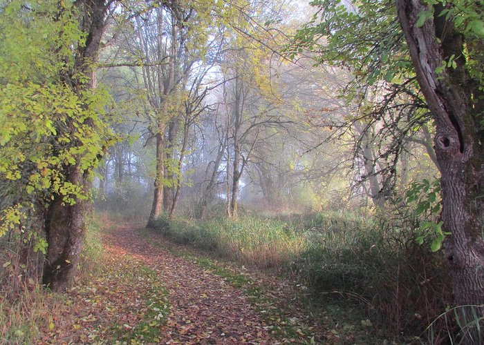 Path Greeting Card featuring the photograph Mystical Path by Angie Vogel