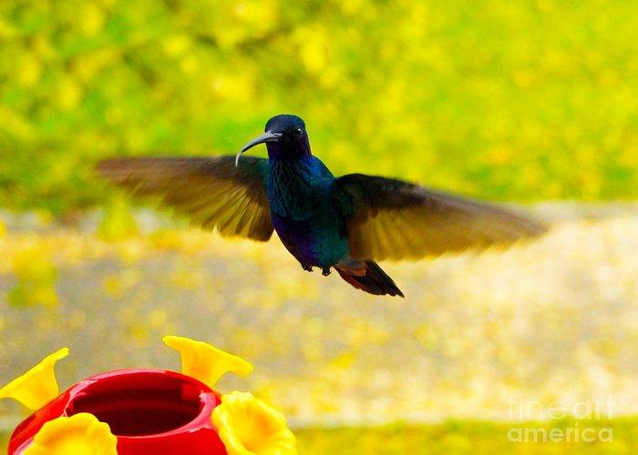 Bird Greeting Card featuring the photograph Na Na Na Na Na Na by Al Bourassa