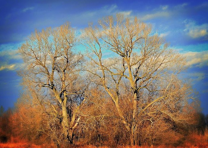 Wall Art Greeting Card featuring the photograph Naked Branches by Marty Koch