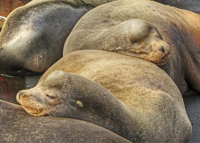 Pinniped Greeting Card featuring the photograph Nap Time 0009 by Kristina Rinell