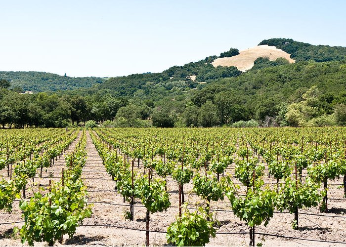 Napa Vineyard Greeting Card featuring the photograph Napa Vineyard With Hills by Shane Kelly
