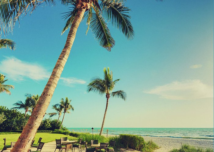 Vacations Greeting Card featuring the photograph Naple Beach Palms by Thepalmer