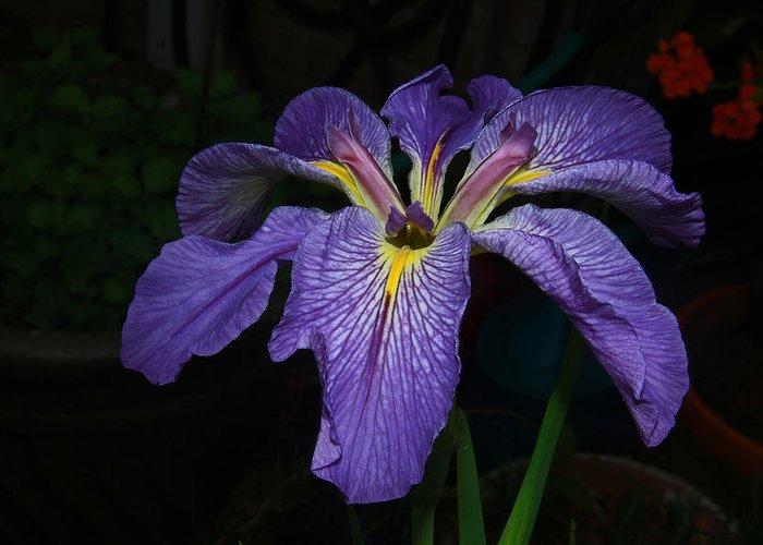 Iris Greeting Card featuring the photograph Native Louisiana Iris by Ronald Olivier