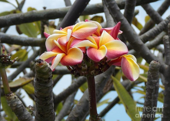 Hawaii Greeting Card featuring the photograph Natural Bouquet by Mindy Sue Werth
