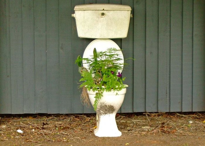 Toilet Greeting Card featuring the photograph Natural Fertilezer by Renato Sensibile