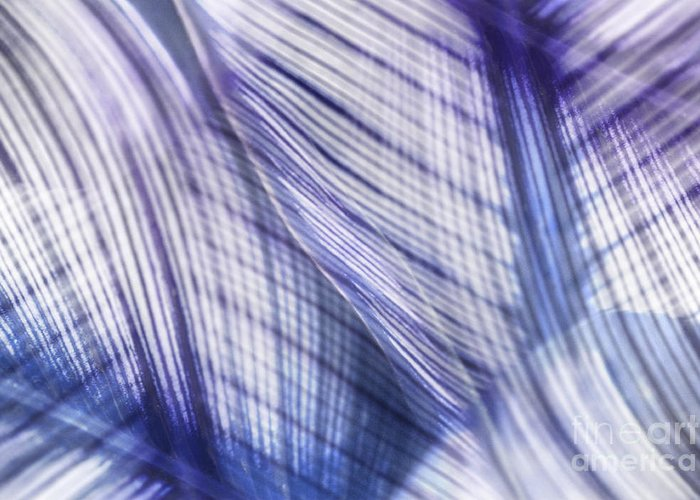 Leaf Greeting Card featuring the photograph Nature Leaves Abstract In Blue And Purple by Natalie Kinnear