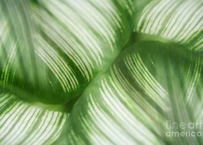 Leaf Greeting Card featuring the photograph Nature Leaves Abstract In Green 2 by Natalie Kinnear