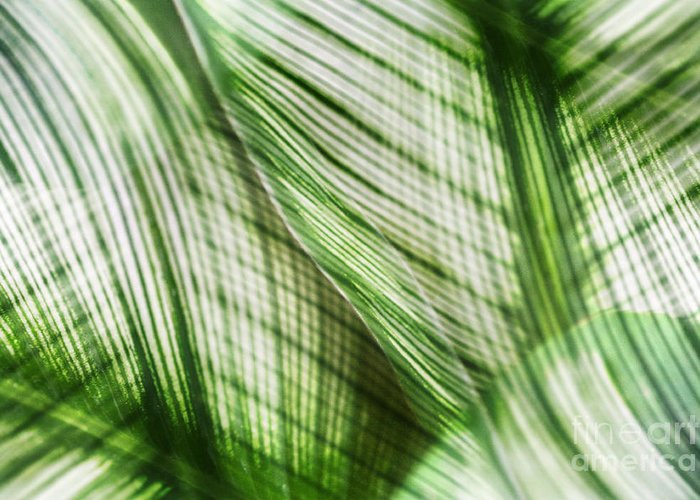 Leaf Greeting Card featuring the photograph Nature Leaves Abstract In Green by Natalie Kinnear