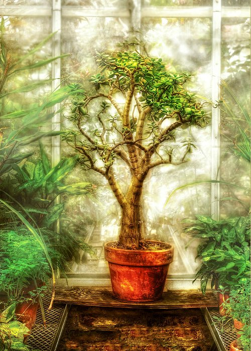 Tree Greeting Card featuring the photograph Nature - Plant - Tree Of Life by Mike Savad