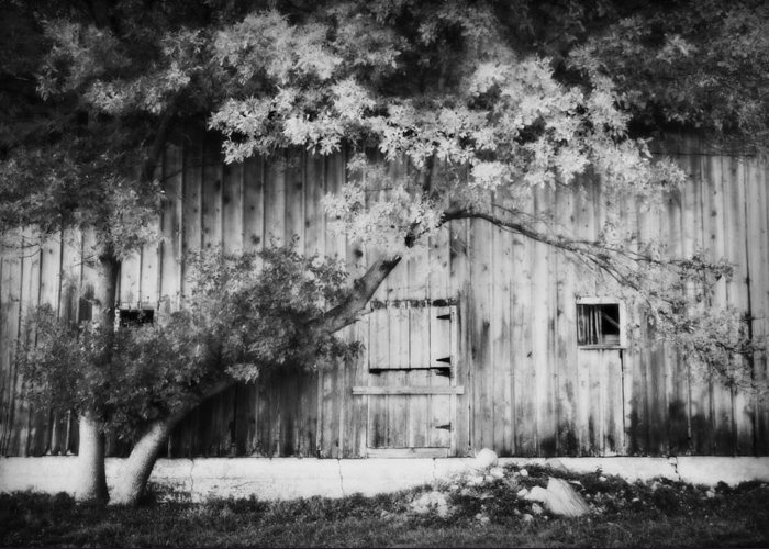 Barn Greeting Card featuring the photograph Natures Awning Bw by Julie Hamilton