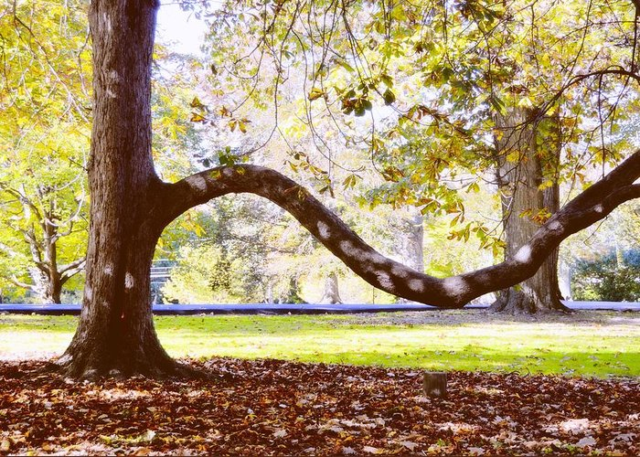 Autumn Greeting Card featuring the photograph Nature's Bench by JAMART Photography