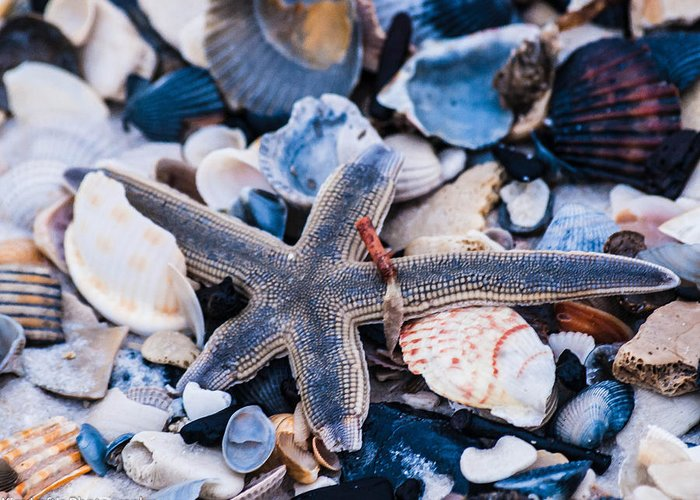 Star Fish Greeting Card featuring the photograph Natures Bounty by Kim Loftis