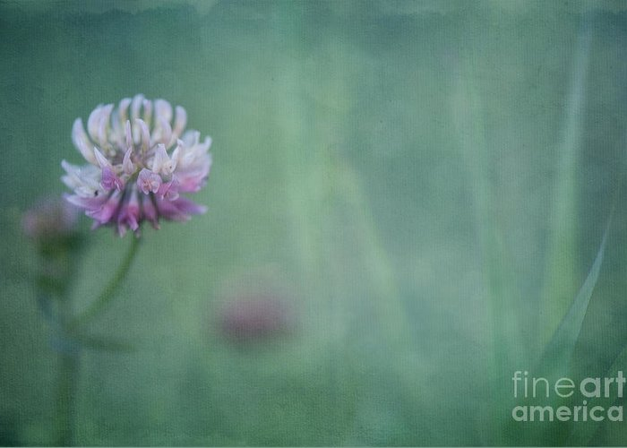 Clover Greeting Card featuring the photograph Natures Scent by Priska Wettstein
