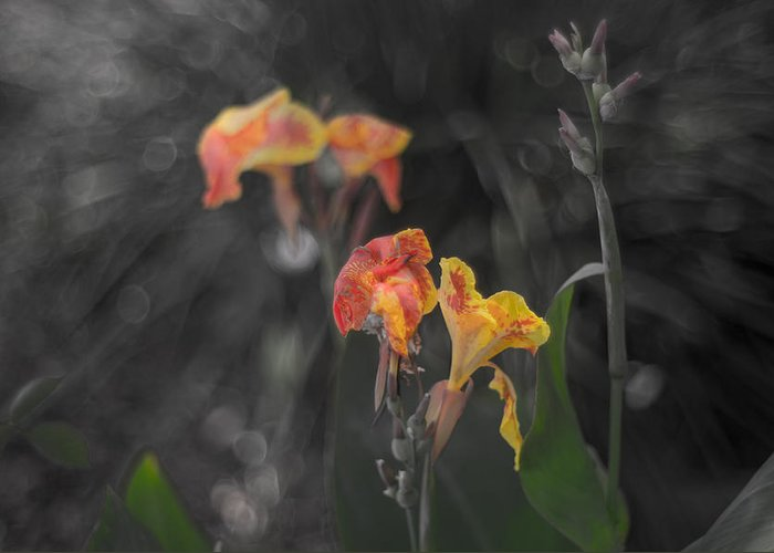 Lower Greeting Card featuring the photograph Naturescape 56 B by Otri Park