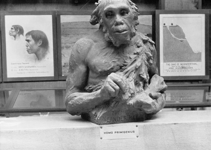 Neanderthal Greeting Card featuring the photograph Neanderthal Museum Display, 1924 by Science Photo Library