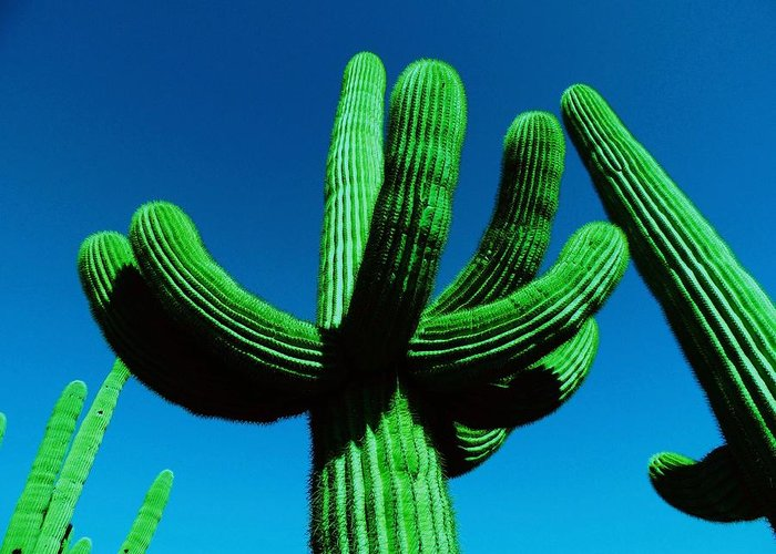 Catus Neon Colors Green Blue Greeting Card featuring the photograph Neon Catus by Todd Sherlock