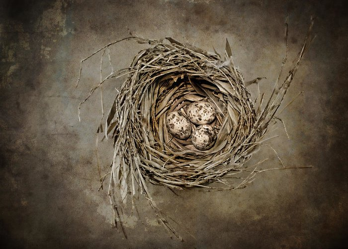 Birdnest Greeting Card featuring the photograph Nest Eggs by Carol Leigh