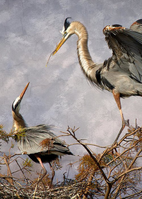 Bird Greeting Card featuring the photograph Nesting Time by Debra and Dave Vanderlaan