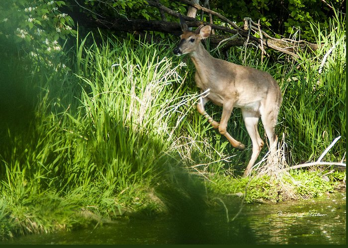 Spring Greeting Card featuring the photograph New Buck by Edward Peterson