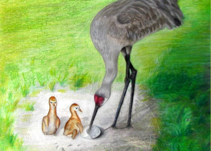 Birds Greeting Card featuring the drawing New Hatchlings Sandhill Crane Chicks by Zina Stromberg