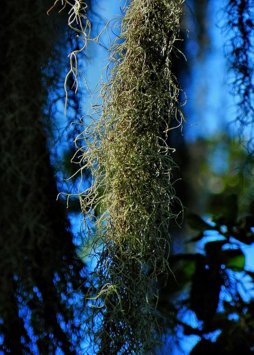 Spanish Moss Greeting Card featuring the photograph New Orleans Tm 0016 by Lance Vaughn