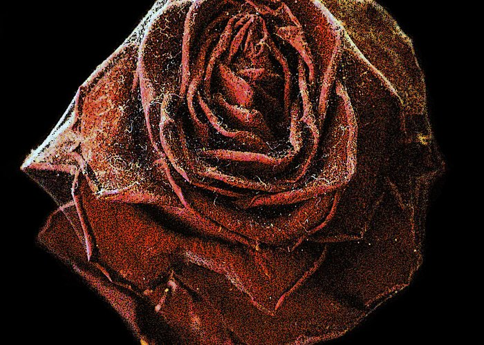 Gothic Greeting Card featuring the photograph Perfect Gothic Red Rose by Toula Mavridou-Messer