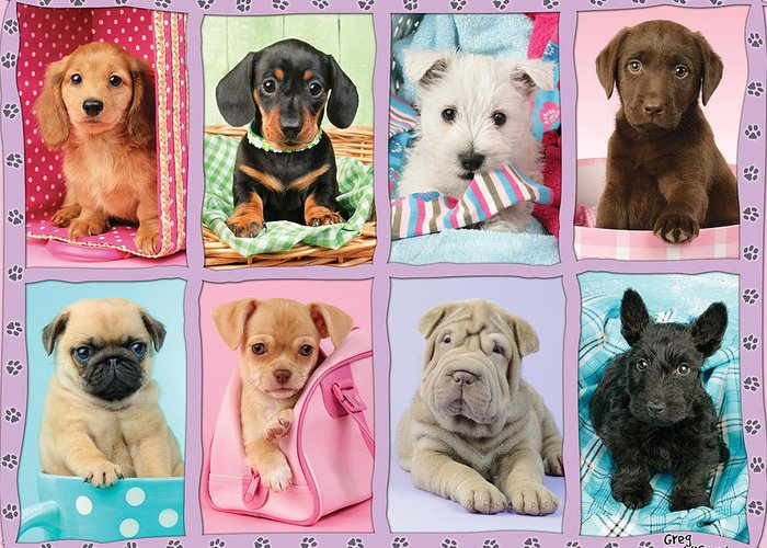 Greg Cuddiford Greeting Card featuring the photograph New Puppy Multipic by Greg Cuddiford