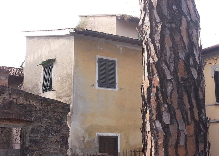 Poggio A Caiano Greeting Card featuring the photograph Nice Bark by Brian McCullough