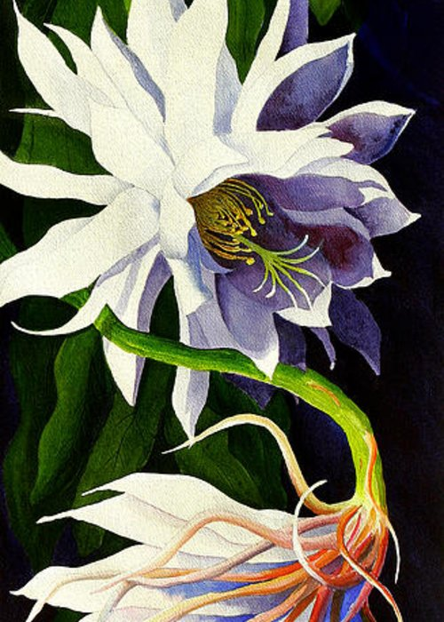 Night-blooming Cereus Greeting Card featuring the painting Night Blooming Cereus by Janis Grau