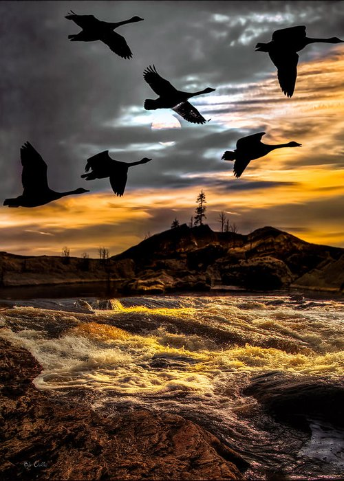 Canadian Geese Greeting Card featuring the photograph Night Flight by Bob Orsillo