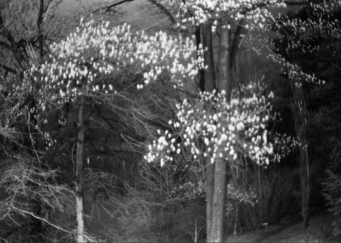 black And White Greeting Card featuring the photograph Night Forest by Bernard Barcos