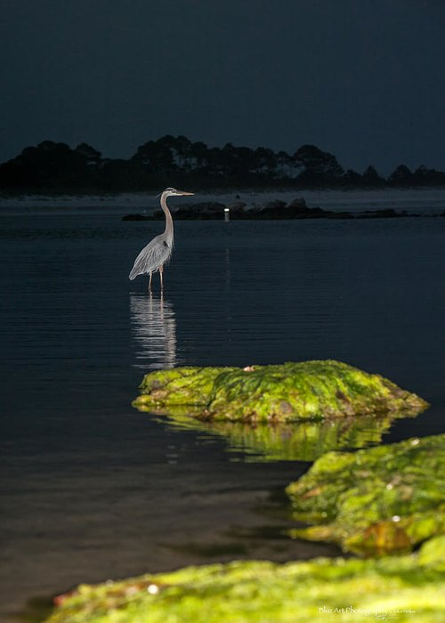 Heron Greeting Card featuring the photograph Night Stalker by Volker blu Firnkes