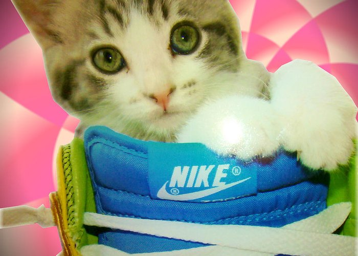 Digital Greeting Card featuring the digital art Nike Kitten by Alexandria Johnson