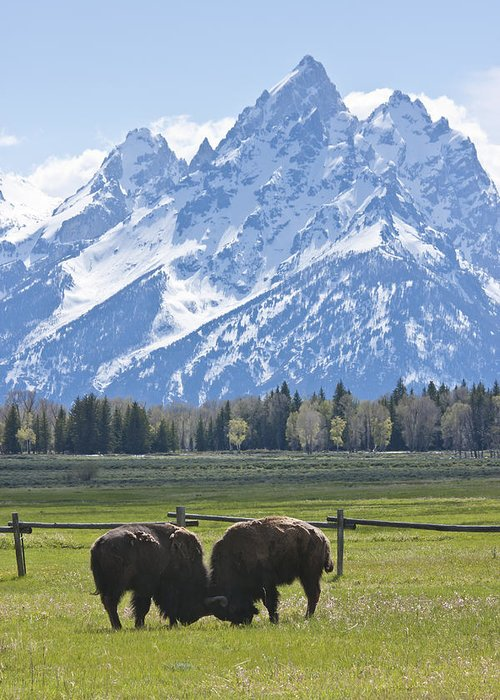 Grand Tetons Greeting Card featuring the photograph No Butts About It by Charles Warren